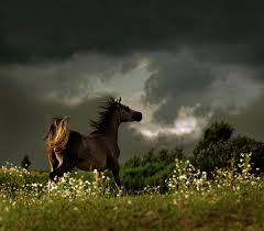 Stallion in the Storm courtesy www.chickensmoothie.com