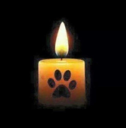 candle paw